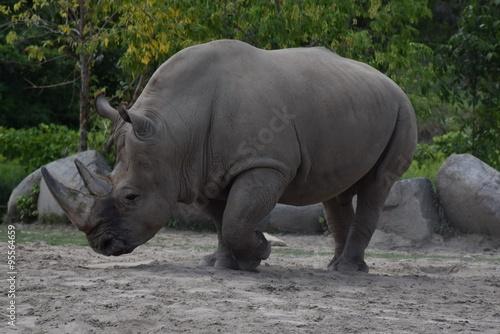 Poster Rhino Rhino at Metro Toronto Zoo