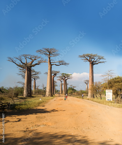 In de dag Baobab Baobab Alley - Madagascar