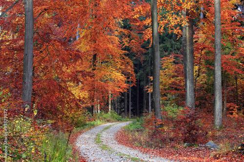 Tuinposter Baksteen Jesienny Bukowy Las