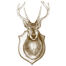 Engraving Stuffed Reindeer Head On White Background