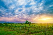 Sunset Over Vines In Kakheti Region