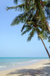 Tropical beach with coconut palm at summer time