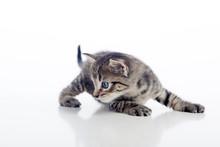 Gatito Girando La Cabeza