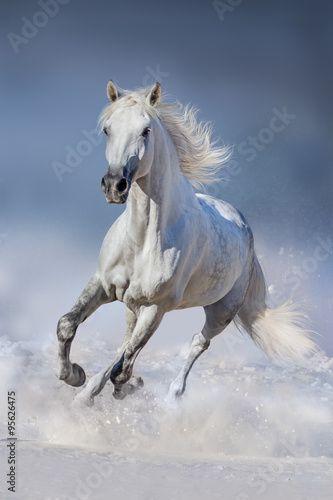 Horse in snow Plakat