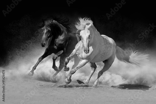 Foto op Canvas Paarden Two andalusian horse in desert dust against dark background