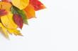 Jesienne liście na białym tle