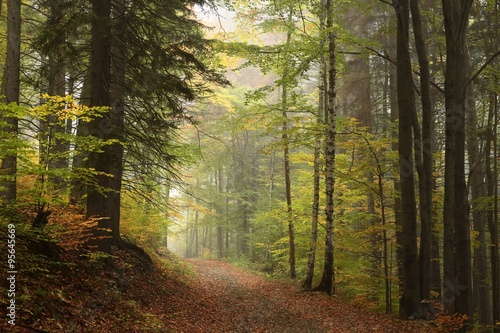 Path through the autumnal forest in foggy weather