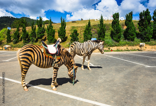 Canvas Prints Zebra horse are painted like a zebra in Vietnam.