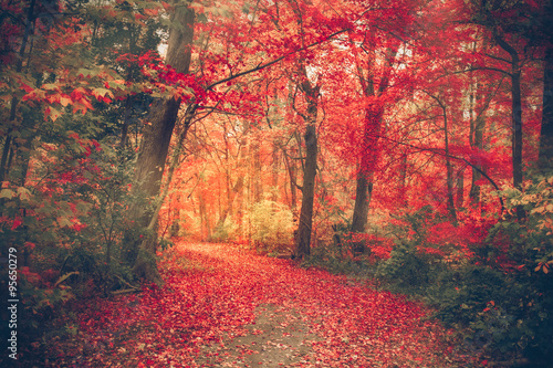 fototapeta na lodówkę Magical forest with autumn colors and red leaves