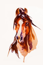 Drawing Head Of The Horse