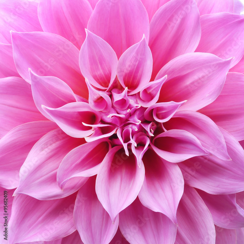 Poster de jardin Dahlia Close up of flower dahlia for background, Abstract petals flower dahlia