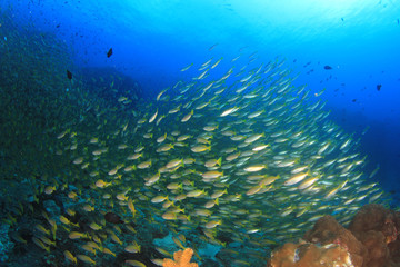 Fototapeta na wymiar Underwater scene coral reef and fish in ocean