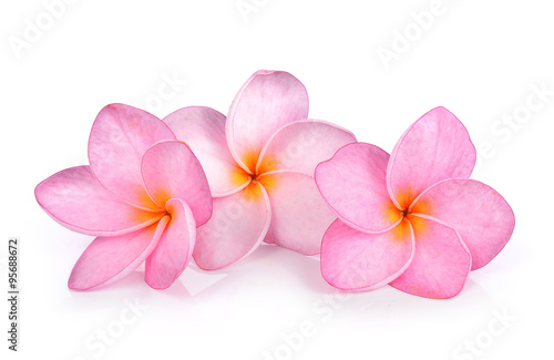 In de dag Frangipani Plumeria on white background
