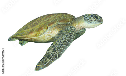 Poster Tortue Green Sea Turtle isolated on white