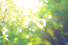 Abstract Natural Blur Background, Defocused Leaves, Bokeh