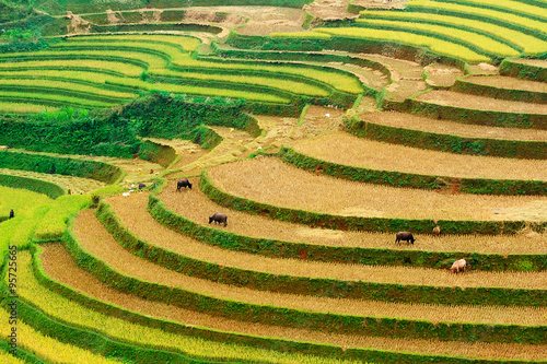Foto  Rice fields on terraced of Mu Cang Chai, YenBai, Vietnam