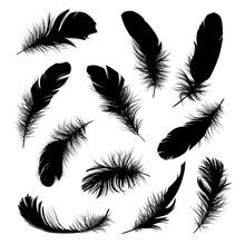 Set Of Black Feathers