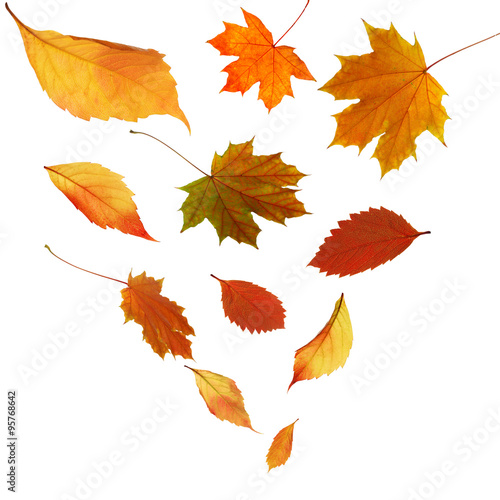 Fototapety, obrazy: Autumn leaves falling down, isolated on white