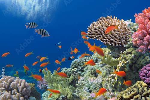Poster Coral reefs Tropical Fish on Coral Reef in the Red Sea