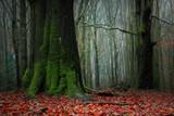 Baśniowy Jesienny Bukowy Las