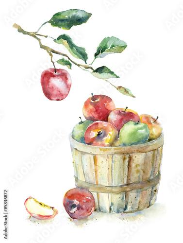 akwarela-jablka-w-koszu-i-na-galezi