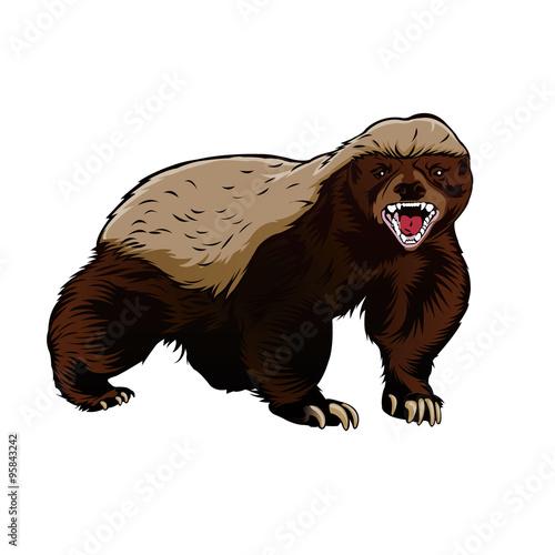 Honey badger illustration color vector Fototapet