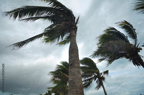 Staande foto Palm boom palms at hurricane