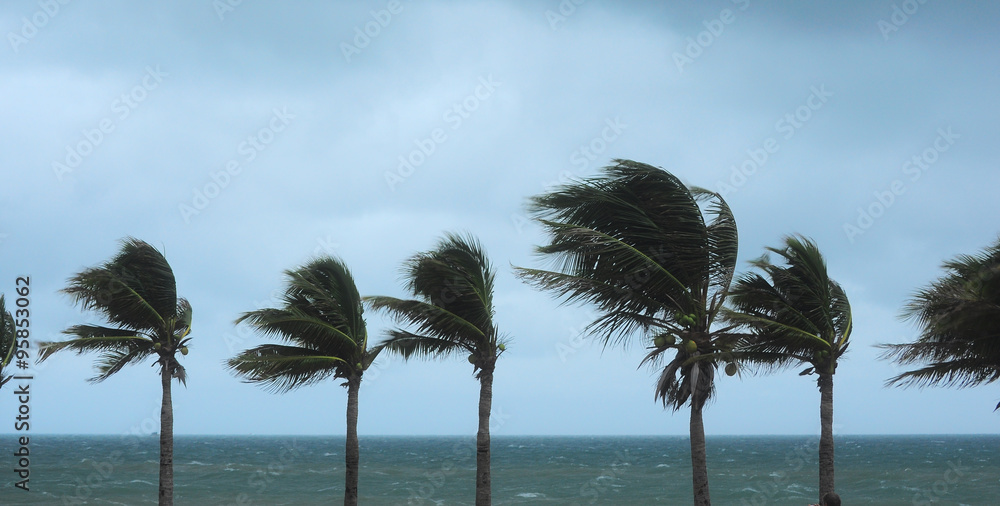 Fototapety, obrazy: Palm tree at the hurricane, Blur leaf cause windy and heavy rain