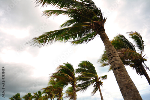 Fotografia  Palm tree at the hurricane, Blur leaf cause windy and heavy rain