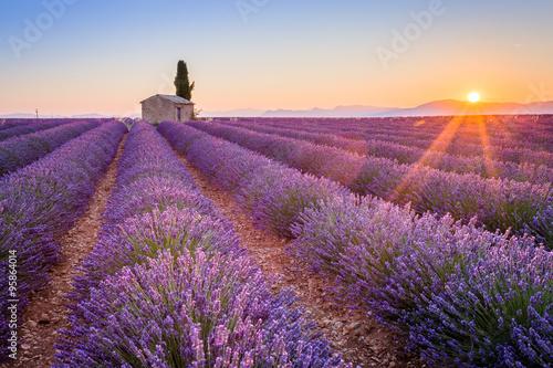 Obraz Prowansja, Francja, płaskowyż Valensole. Wschód słońca nad pięknym kwitnącym lawendowym polem - fototapety do salonu