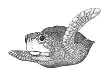 Sea Turtle Engraving Illustrat...