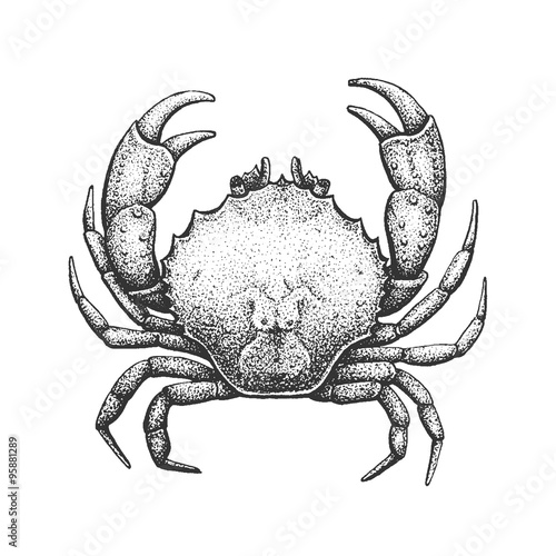 Fotografie, Obraz  Crab Engraving Illustration