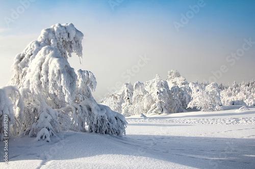 Fotobehang Wintersporten Winter forest