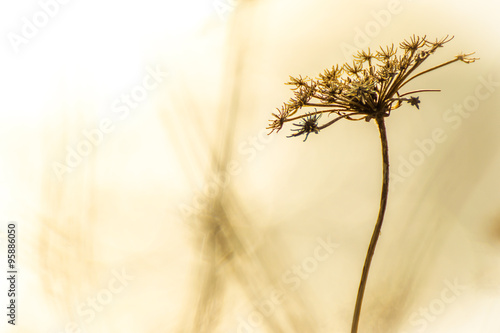 Fotografia Floral background with space for text