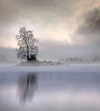 Nagie drzewa w mglisty krajobraz - 95909443