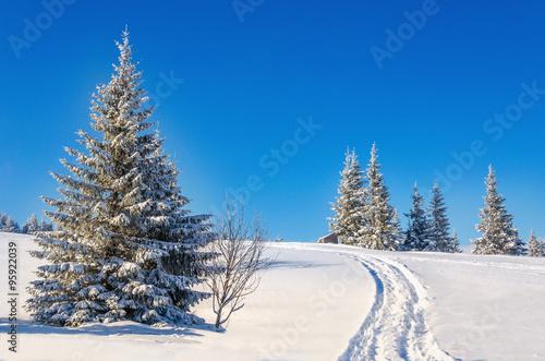 Carta da parati Fairytale winter landscape with snow-covered trees