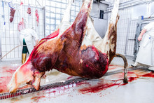 Butcher In A Slaughterhouse
