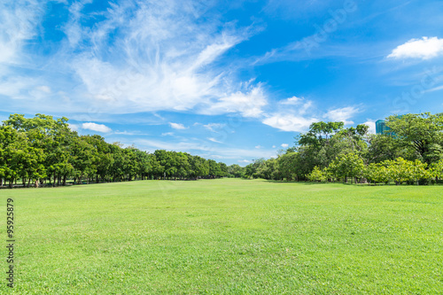 Fototapeta Green grass field in big city park obraz
