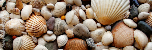 Fotografía  Sea Shells Seashells Panorama - assorted shells / pebbles - back