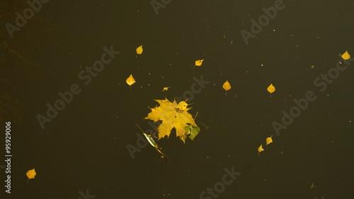 Photo осень