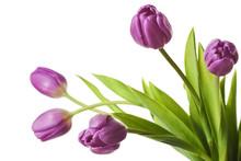 Tulips Purple Tulip Flowers Is...
