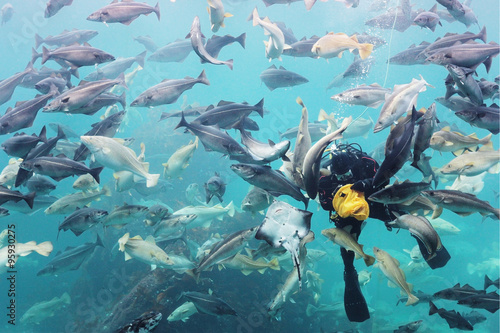 Diver in wetsuit feeding a bunch of fish in a huge aquarium. underwater diving
