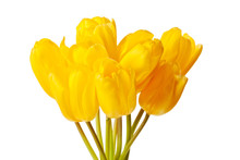 Spring Tulips Isolated