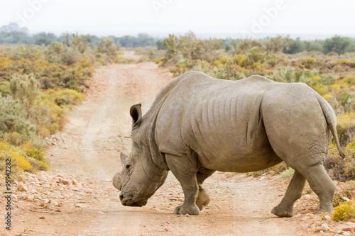 Poster Afrique Rhino - ZA