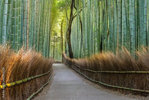 Poster Bamboe Bamboo forest path in japan