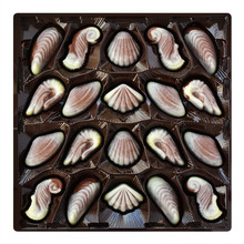 Chocolate Candies, Seashell And Seahorse Truffles, Artisanal Confections In A Box On A White Background