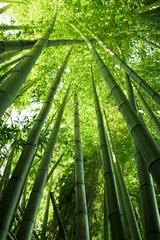 Panel Szklany Podświetlane Bambus Lush green bamboo
