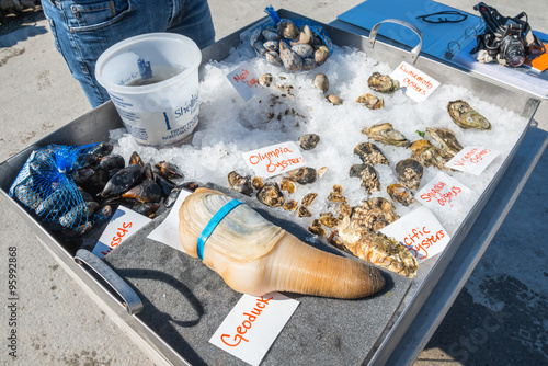 Valokuva  Fresh Shellfish Display including Geoduck, Oysters, Mussels, and Clams