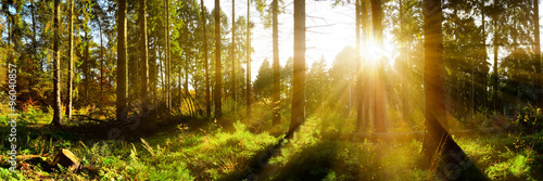 Foto auf Gartenposter Wald Wald Panorama mit Sonnenstrahlen