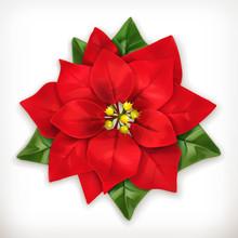 Poinsettia, Christmas Star Vec...
